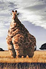 fat-giraff.jpg